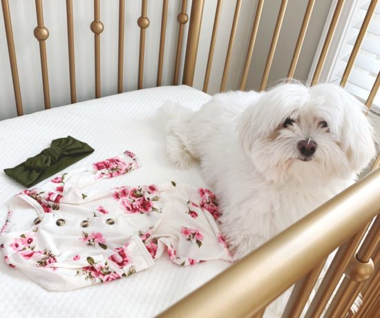 Baby crib with a maltese dog laying in it.