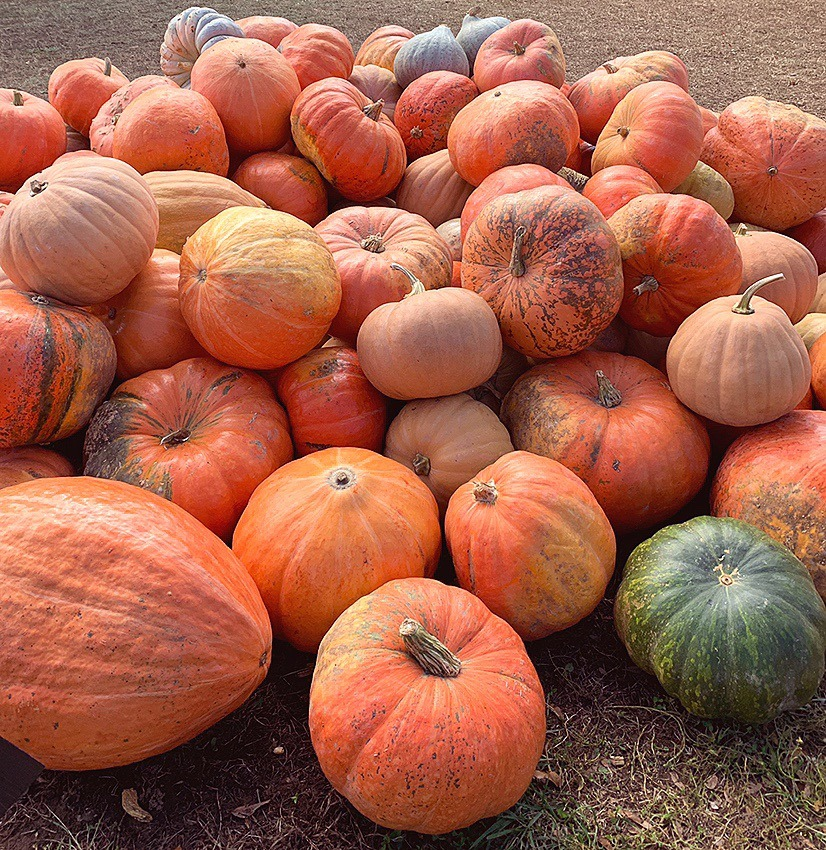 large pile of different colored pumpkins